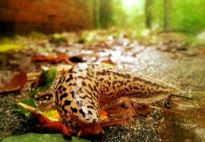 Limax Maximus by stille-spur