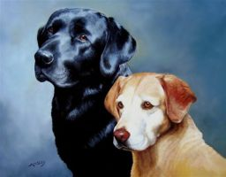 Portrait of 2 Labs by AinsleyM