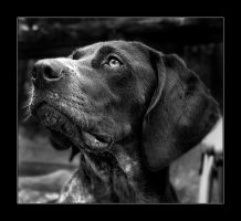 A dog, for a change... by Aville