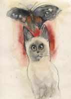 Siamese cat and Butterfly by ChloeC