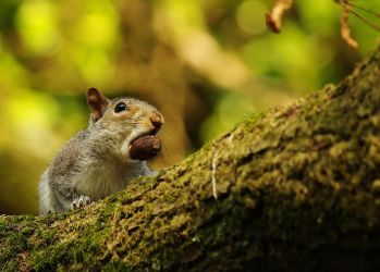 squirrel sec 2 by thisable