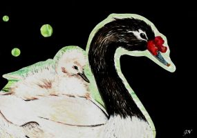 Third comission black-necked swan for f.dancer123 by chinchillacosmica