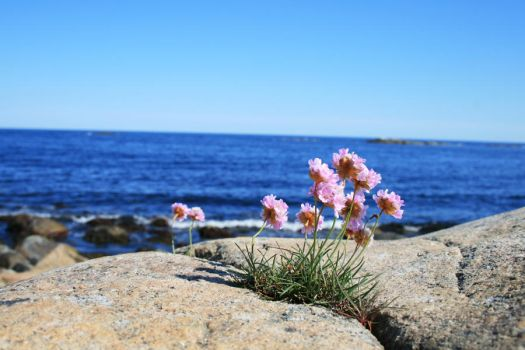 Coastline Flower by mikrei