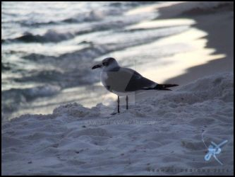 Seagull in Pensacola by KAW-7391