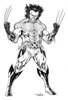 Feral Wolverine by SpiderGuile