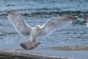 Seagull 07 Stock by lokinststock