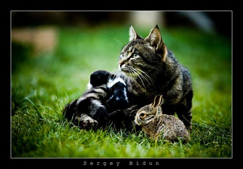 Cat and Baby Rabbit... by sergey1984