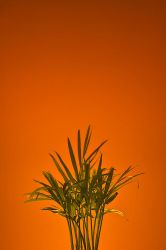 Orange Growth by duo