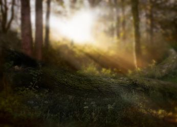 Forest Log 1 by Jeni-Sue