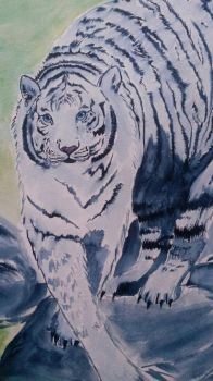 White tiger by megumi16