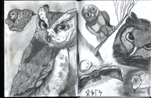 Owls from sketchbook by GentlestGiant