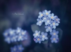 Blue shades. by Phototubby
