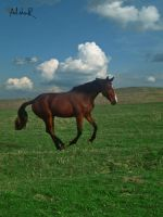 horse speed by ad-shor
