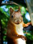 Squirrel 257 by Cundrie-la-Surziere