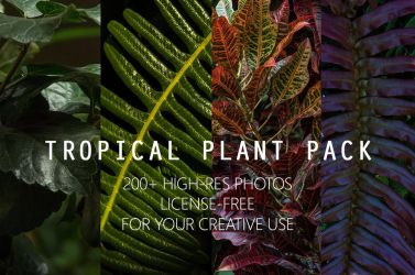 Tropical Plant Pack by allisonchinart