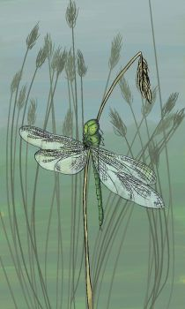 Dragonfly on grass by carriehowarth