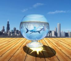 shark in the glass by kovacevic
