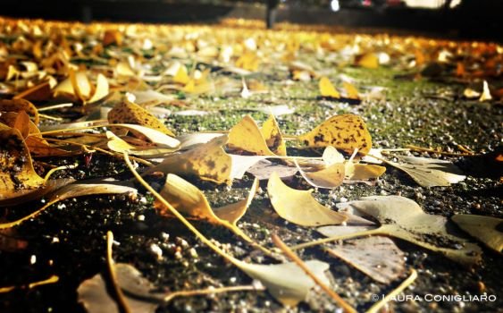 Leaves beneath your feet by Pixturesque