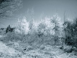 Infrared Spring 2 by suricata5