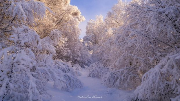 Winter Wonderland by SebastianKraus