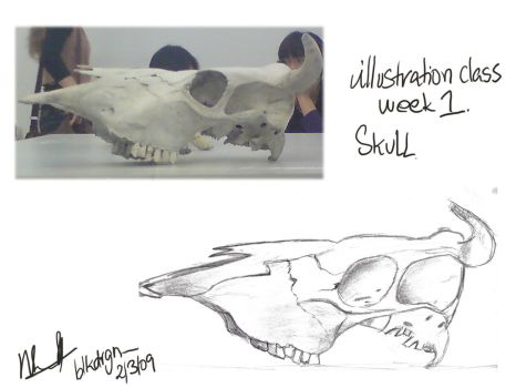 Illustration: Skull by blkdrgn