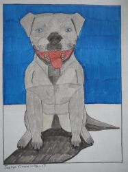 Blue Nose Pit bull by Justyn16