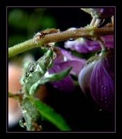 Water Drops....2 by Pjharps