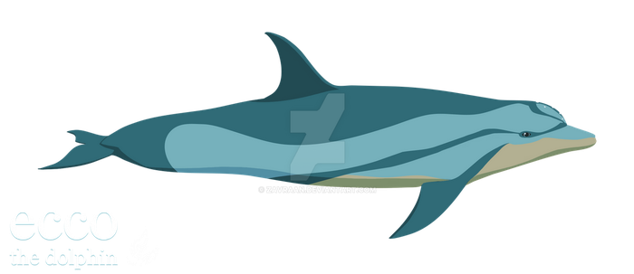 Ecco the dolphin - New style by zavraan