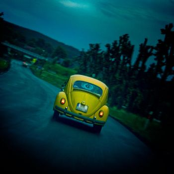 Beetle on road by WiciaQ