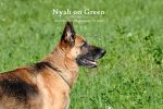 Nyah on Green by Arnaldo-aka-Homer