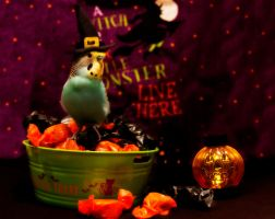 HAPPY HALLOWEEN from Budgie! by SnakeGeisha