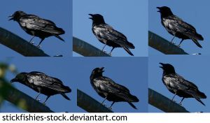 6 Crows by Stickfishies-Stock