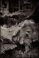 Ferns by daaram
