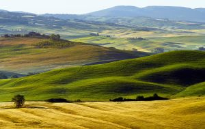 Val d'Orcia  16 by CitizenFresh