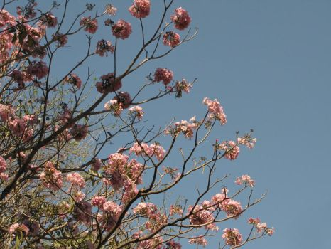 Flowers in the Sky II by Calcobrinus