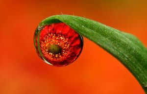 Dew Drop Refraction 27 by Alliec