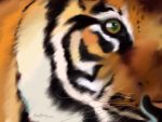 Tiger's eye by wyldcoloure
