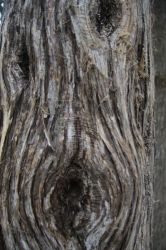Tree Bark by Audrey7648