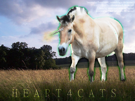 Heart4cats by winterbright