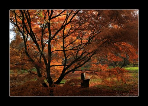 Westonbirt wonderment . by 999999999a