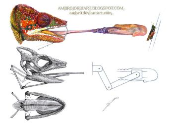 The hyoid bone and the tongue of the Chameleon by AmBr0
