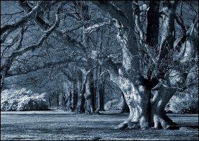 Blue Oak Tree infrared... by MichiLauke