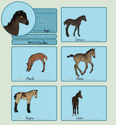 SA | Hypo Foals | Arges Edition by MusicalMagpie