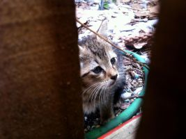Kitty Looking Through The Fence by R3Create