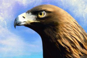 Eagle Portrait by allison731