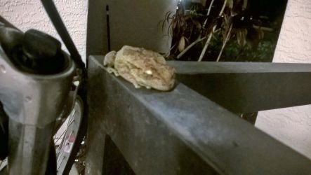 Frog by my bike (close up) by Lucasfan375