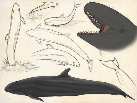 False Killer Whale Sketch Page by Bandarai