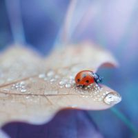 through the droplets by all17