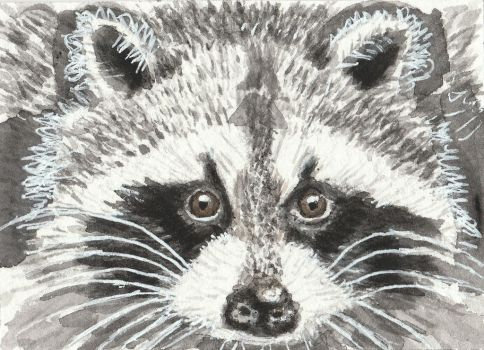 Raccoon face watercolor aceo painting by tulipteardrops