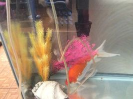 Murphy (My fish) (Goldfish) by Ginger-The-Bunny